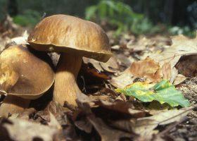 camping parc naturel perigord champignons